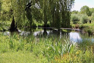 recreational pond excavation